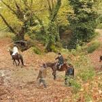Δραστηριότητες στην Βόρεια Εύβοια: ιππασία.