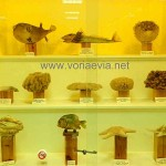 Μουσείο Φυσικής Ιστορίας του Κυνηγετικού Συλλόγου Ιστιαίας