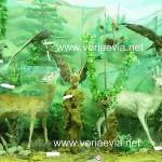 Μουσείο Κυνηγετικού Συλλόγου Ιστιαίας
